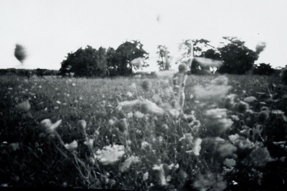 Weeds, Pinhole Photograph on paper