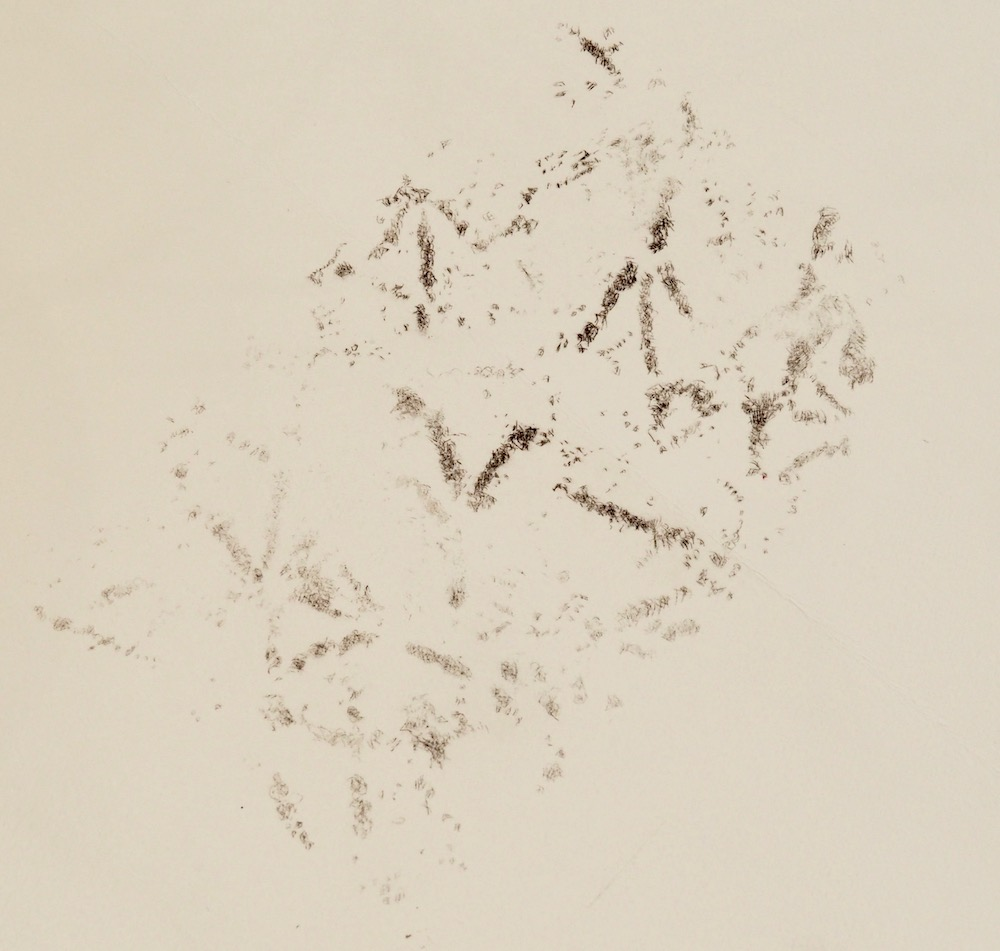 drypoint detail bird cloud